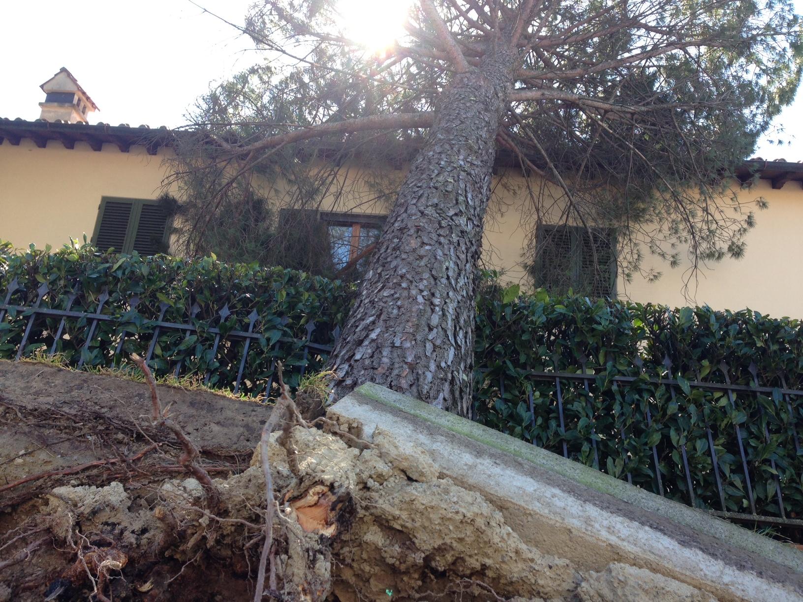 Auto case e giardini danneggiati il vento mette in crisi for Immagini giardini case