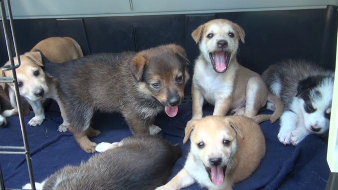 Stanno bene gli otto cuccioli meticci abbandonati