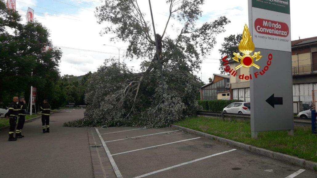 albero caduto via confini