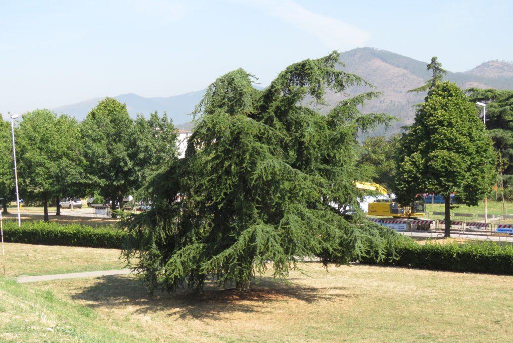 giardini v baracca tarlo asiatico