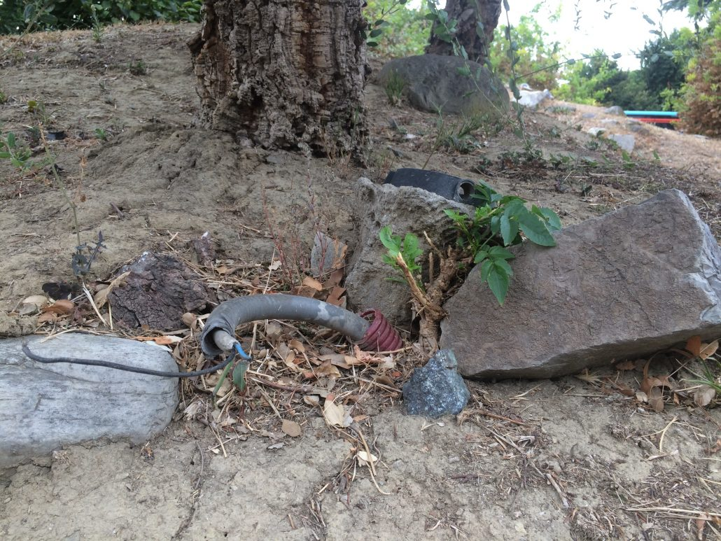 foto rotatoria bonsai incuria (13)
